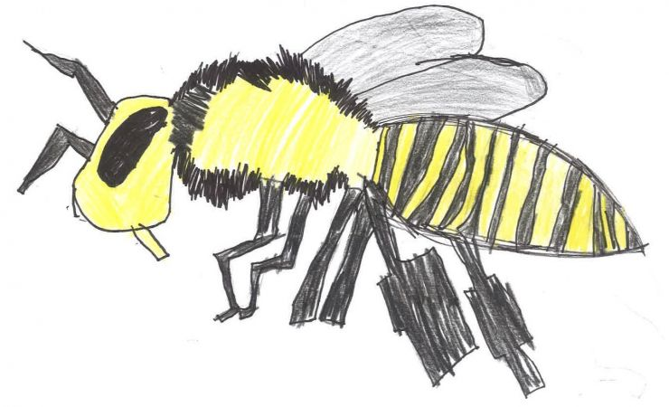 1st grade artwork of bees